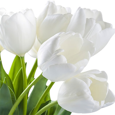 White Tulip By An Item